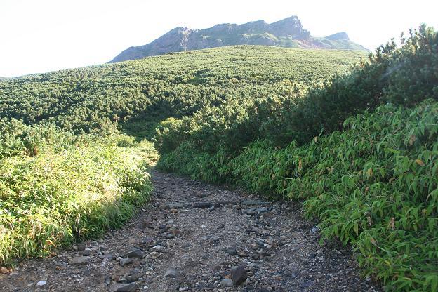 朝の登山道