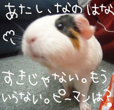 nanohana007.jpg