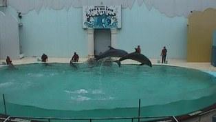 1124水族館1
