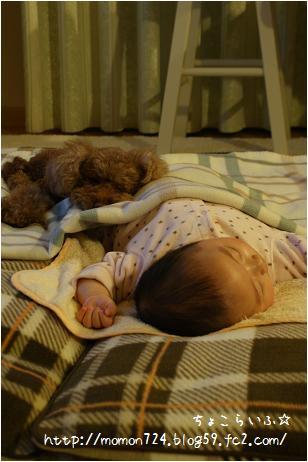 添い寝するココ