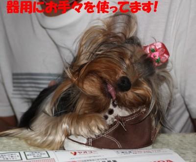 IMG_0141 ④