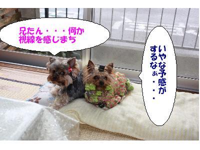 IMG_0719 コピー1