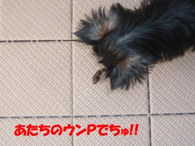 P1070411 ①