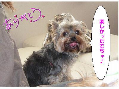 P1070408 あんじゅ コピー1