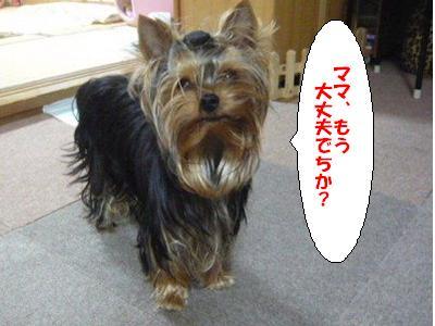 P1070830 ぷ コピー1
