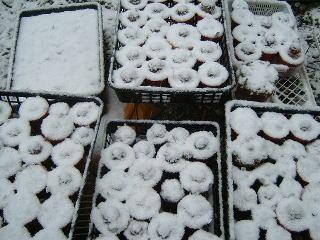 雪に埋もれた