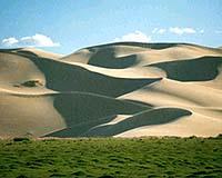砂漠化する緑地