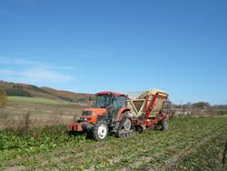 ビート収穫3