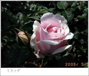 R0010342.jpg