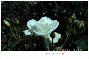 R0010347.jpg