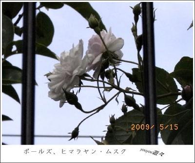 R0010506.jpg