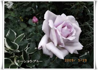 R0010685.jpg