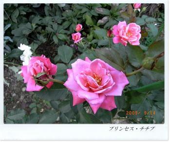 R0011954.jpg