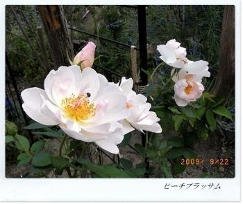 R0012019.jpg