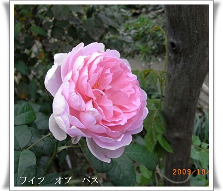 R0012148.jpg