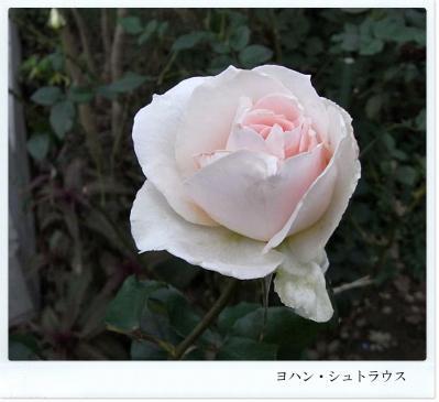 R0012199.jpg