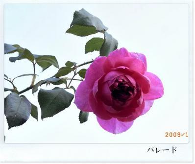 R0012211_20091017181135.jpg