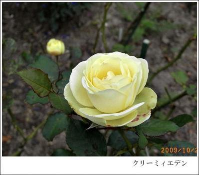 R0012287.jpg