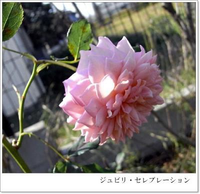 R0012331.jpg