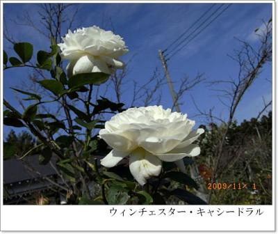 R0012334.jpg