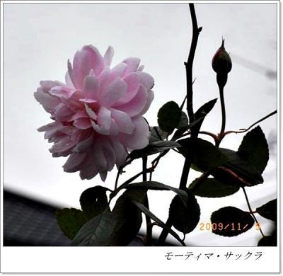 R0012358.jpg