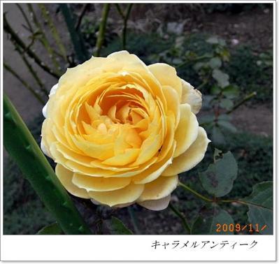 R0012361.jpg