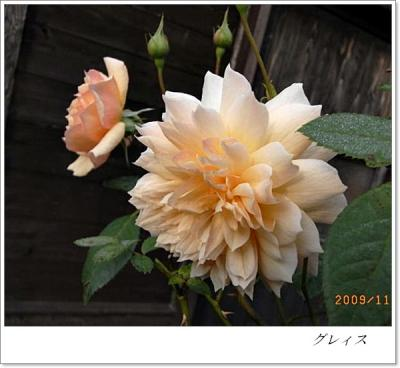 R0012374.jpg