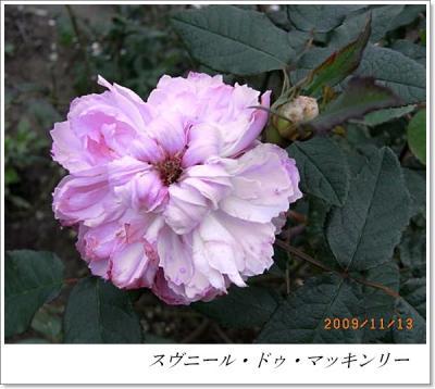R0012395.jpg
