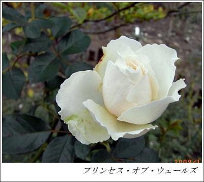 R0012420_20091120143942.jpg