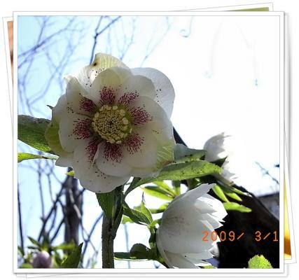 RIMG0065_20090314132130.jpg