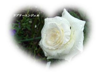 RIMG0070_20080918185212.jpg