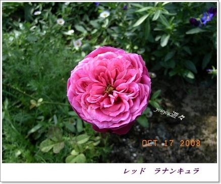 RIMG0132_20081017163441.jpg