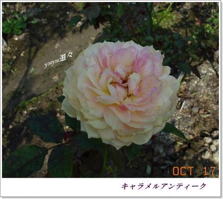 RIMG0133.jpg