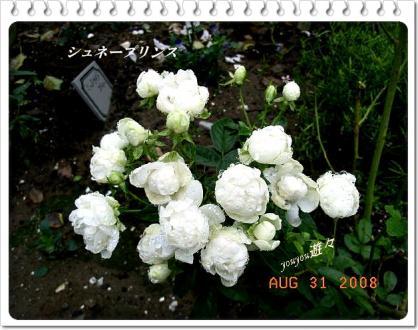 RIMG0335.jpg