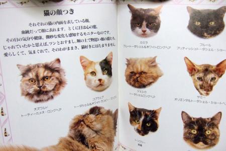 いろいろなぶち猫