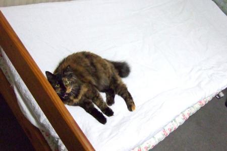 ベッドの上で3
