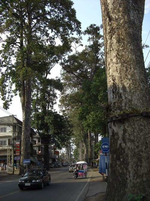 1-巨木 1