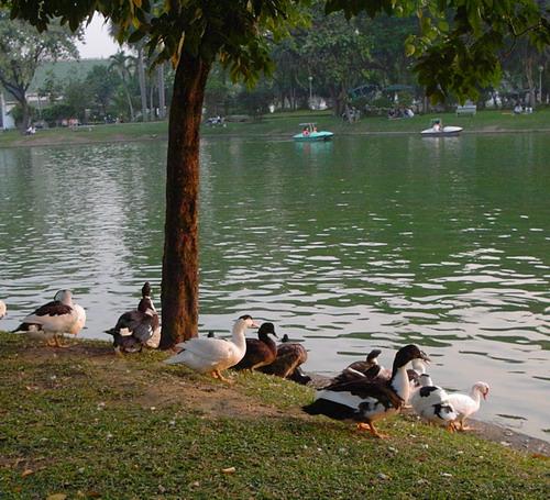 1-Lumpini park