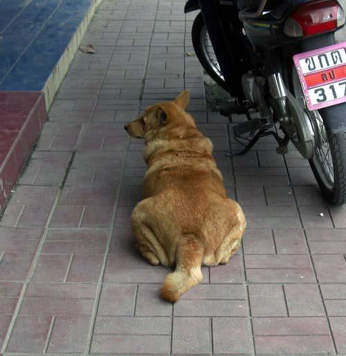 1-buta dog