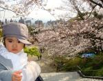 2009年桜