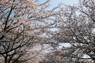 常願寺公園3