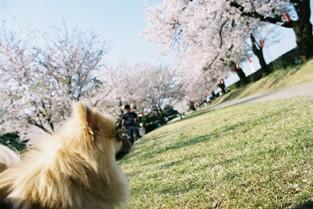 常願寺公園6