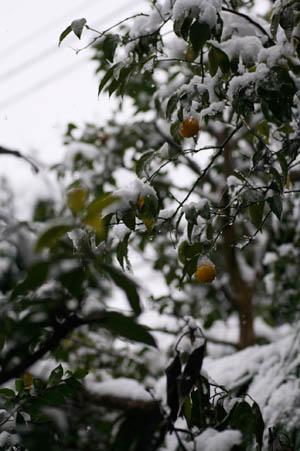 柚子雪帽子