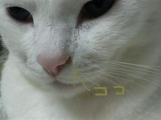 2008092421040000-st.jpg