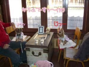 DogCafe