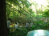 森林公園冒険コースつり橋