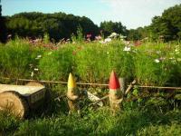 森林公園お花畑