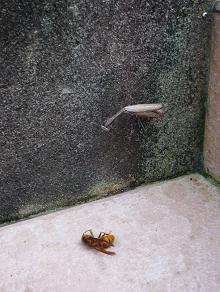 スズメバチ・・・