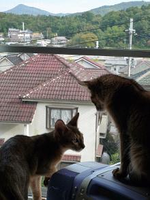 出窓・・・