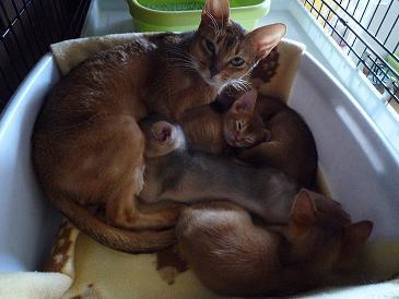 静ママ&4兄弟
